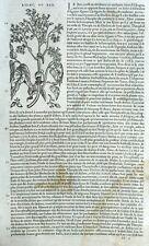 Botany Ben Lilac Engraving matthioli Mattioli Dioscorides matthiole