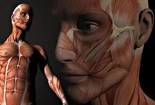 A4 Poster-mise en page musculaires du visage humain et corps (photo print art ANATOMIE)