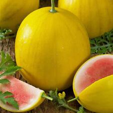 10 Early Watermelon Seeds GOLDEN MIDGET Heirloom Yellow Fruit Red Flesh