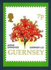 GUERNSEY - 1993 - CARTOLINA - FIORI: Guernsey Lily - Nerine Sarniensis