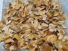 Genuine Texas Live Oak Leaf Litter 1 Gallon Vivarium, Dart Frog, Snake, Isopods