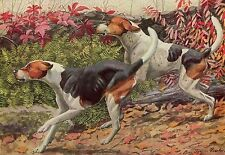 Vintage Antique English & American Foxhound Dog 1919 Rare Art Print