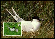 Benín Mk pájaros Schwalbe Swallow Tern maximum mapa maximum card mc cm m892