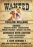 """ENGLISH BULLDOG Wanted Poster Fridge Dog Magnet LARGE 3.5"""" X 5""""  #2"""