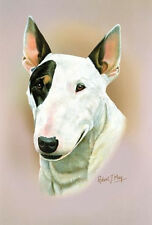 Robert J. May Head Study - Bull Terrier (RMDH030)
