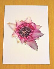 KEW GARDENS ~ ORCHID POSTCARD ~ UNDERGROUND ORCHID ~ R.S. ROGERS, 1928