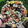 Rare Mix Lithops Seed Living Stones Succulent Cactus Organic Home Gargen 50/100x