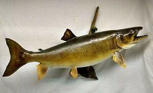 "Huge 38"" Real Skin Lake Trout Taxidermy Fish Mount Fishing Lodge Decor"