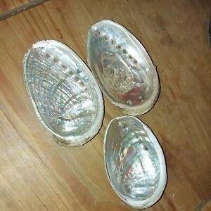 coquillage conque nacré abalone ormeau lot de 3
