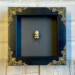 Pearl Man Face Stink Bug (Eucorysses grandis) Baroque Deep Box Frame Display