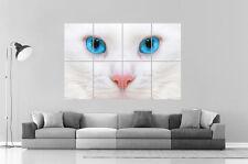 Blanca Cat Blue Ojos Gato A azul Cartel Grande formato A0 Largo Print