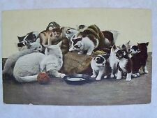 A Group of Very Cute: Kitties, Kittens, Cats, Felines. Mailed: 1907 Postcard