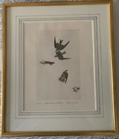 Vintage Framed and Matted Audubon Print Violet-Green Swallow Bank Swallow Plate