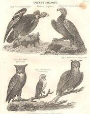 Ornitologia: accipitres; CONDOR; Golden Eagle; Horned, CMN Virginian GUFO; 1830
