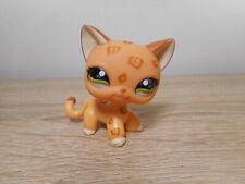 petshop chat européen #1120 / cat