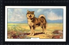 Gallaher Dogs 2nd Series 1938 - Dingo No. 34