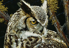 """Eye of the Beholder - Great Horned Owl"" Carl Brenders Limited Edition Print"