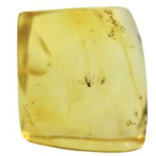 More details for baltic amber with fossil insect inclusion fse378 ✔100%genuine✔ukseller