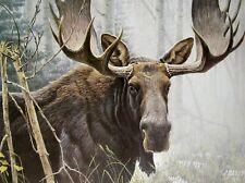 Vintage Art Robert Bateman 2 in 1 Bull Moose 1978 Goshawk Detail 1973 Hawk Wild