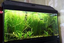 Fluval Roma 200 fish tank. Full set up with T5 HO lighting system & JBL filter
