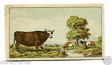 Victorian Trade Card BOSTON BEEF PACKING CO Roast Beef Tongue Green Turtle