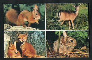 Posted 1979: New Forest Wild Life: Rabbit: Fox: Deer: Red Squirrel