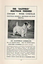 "SEALYHAM TERRIER OLD VINTAGE 1934 DOG PRINT PAGE "" CHAMPION EASTFIELD CANDIDATE"