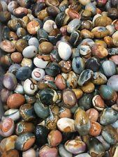 Wholesale 5pcs Natural Ocean Jasper Stone Rock Specimen Polished Randomly Send