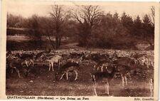 CPA Chateauvillain - Les Daims au Parc (270123)