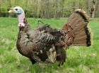 """Real Feather Taxidermy """"Stuffer"""" Turkey Decoy- string controlled movement"""