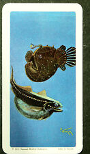 Deep Sea Fish     Illustrated Vintage Card  #  EXC