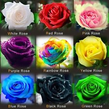 100 ROSE SEEDS Rare Rainbow Pink Purple Green Black White Red Blue mixed package