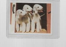 1980 National Geographic World Dog Series Bedlington Terrier #25