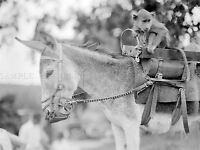 Young Lady Bird Johnson Riding Donkey Manitou CO Silver Halide Photo
