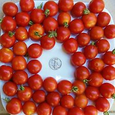 Large Red Cherry - Organic Heirloom Tomato Seeds - Huge Cherry - 40 Seeds