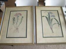"Two Custom Framed Old Iris & Alstroemeria Botany plant art prints 30x22"""