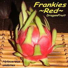 ~FRANKIE'S RED~ DragonFruit Red Skin Red Plup Pitaya Hylocereus 100+ Seeds