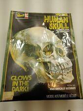 Vintage Revell Life Size Human Skull Model Glow In Dark Sealed