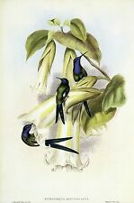 "1990 Vintage HUMMINGBIRD #42 ""SWALLOWTAIL SWALLOW TAIL"" GOULD COLOR Lithograph"