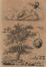 Hippidae (mole crab). Hippobosca fly. Hippocastanum (horse chestnut tree) 1834