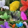 Natural Ostrich Feathers 5pcs Wedding Party Decor Multi Colors&Sizes Wholesale