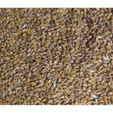 Burnhills Whole Wheat 25Kg - Poultry / Pigeon Food
