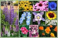 Deer-Resistant-Wildflower Mix 2500 Seeds -13-Species-of-Wildflower