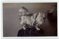 (Sc377-100)  Cat Standing On Chair, unused ,Vg