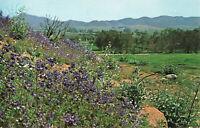 Postcard WildFlowers In Bloom