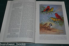 1935 magazine article, THE TANAGERS AND FINCHES, birds, color art