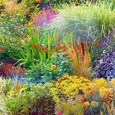 Large Garden Perennial Shrub Plants Mixed Garden Ready 1L Plants Lucky Dip T&M