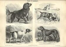 Stampa antica CANI DA CACCIA Retrievier Fuchshund 1890 Old antique print