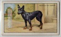 Black and Tan Terrier Dog 75+ Y/O Ad Trade Card