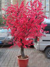 10 Pcs Red Japanese cherry blossoms Seeds Courtyard Garden Bonsai Tree Seeds Sma